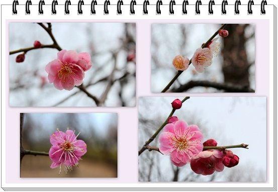 梅祭りUP3-20130217