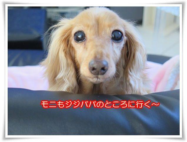 9_201403080641232c1.jpg