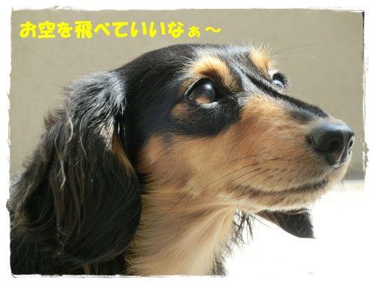 CIMG5-20130416.jpg