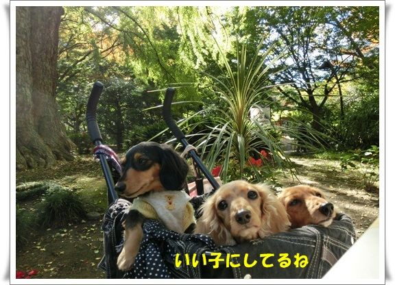 CIMG5711-20121111.jpg