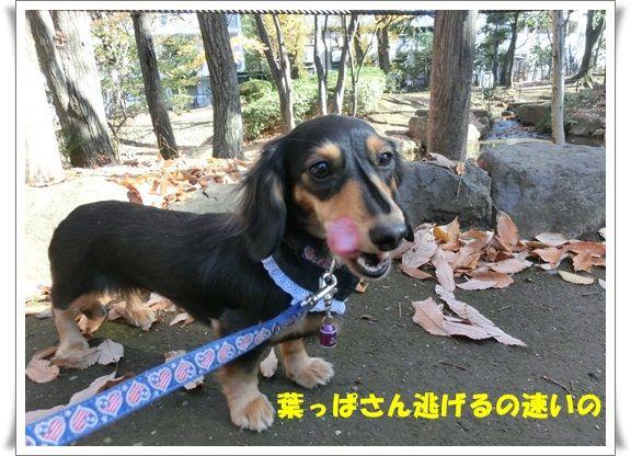 CIMG7969-20121208.jpg