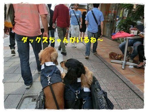 CIMG4255-20121008.jpg