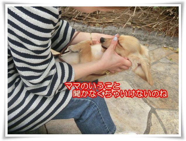 14_201404210927211ce.jpg