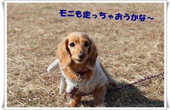 IMG_5087-20130212.jpg