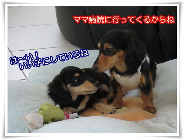 10_2014032821400892c.jpg