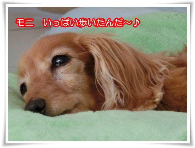 11_20150923204502f4d.jpg