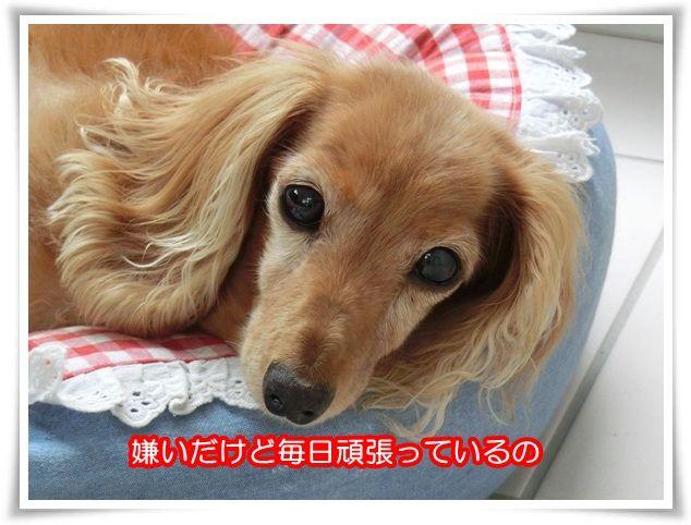 16_20150613204018672.jpg