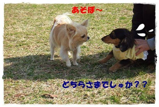 DSCF9256-20121221.jpg