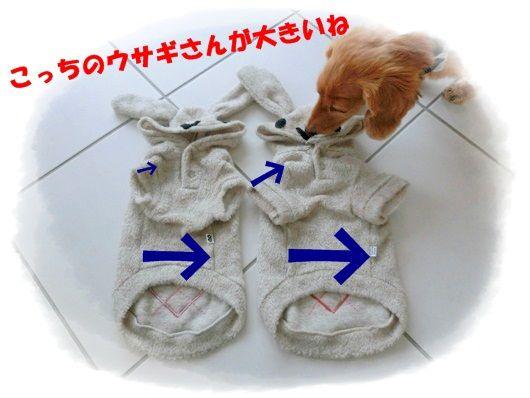 CIMG8698-20130105.jpg