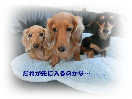 CIMG4615-20121016.jpg