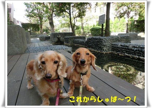 CIMG4722-20121017.jpg