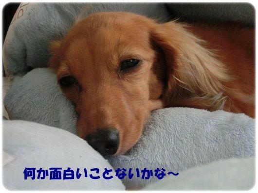CIMG4-20130116.jpg