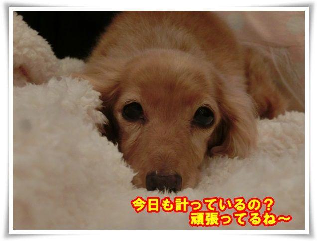 10_201312211128523d7.jpg