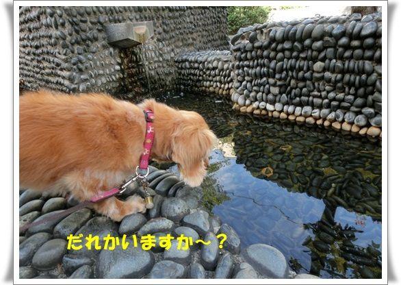 CIMG4727-20121017.jpg
