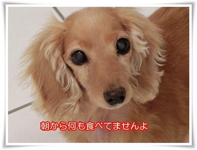 9_20141120075718796.jpg
