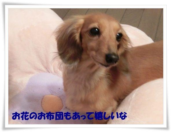 10_20130613083746.jpg