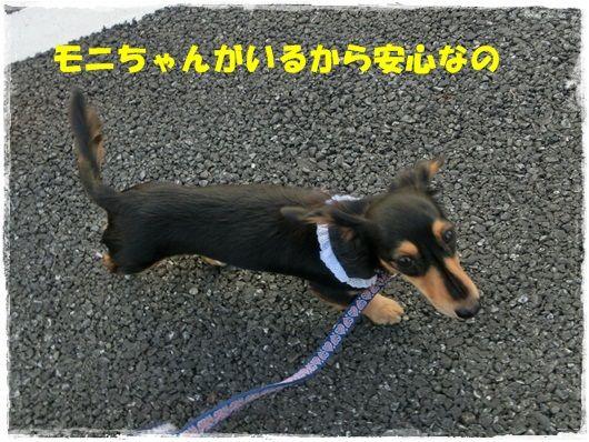 CIMG6290-20121121.jpg