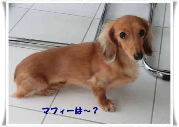 CIMG8291-20121223.jpg