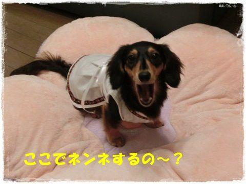 CIMG0980_20120817135151.jpg