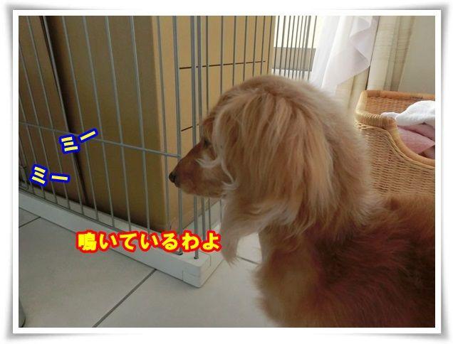 2_20131226101521acb.jpg