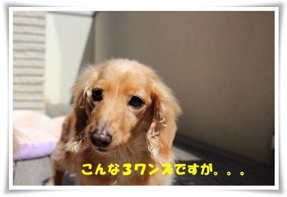 IMG_7.jpg