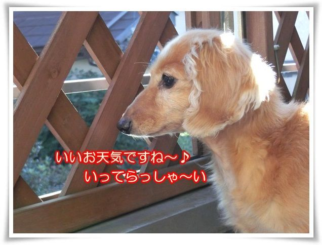 2_20141114083605f8d.jpg