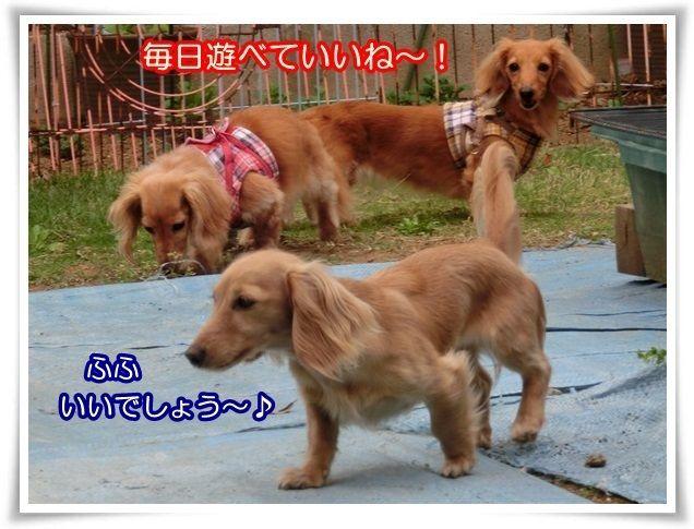 9_20140429200517a43.jpg