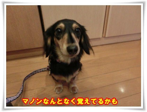 b_201310211158418a0.jpg