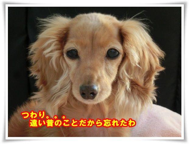 8_2013112011420086f.jpg
