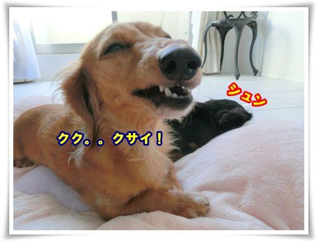 4_20131123095904d21.jpg