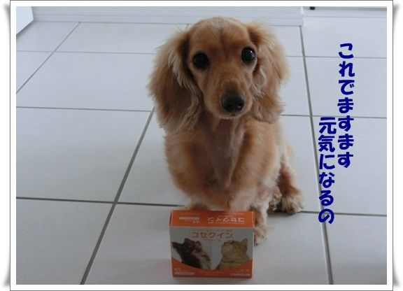 CIMG4472-20121013.jpg