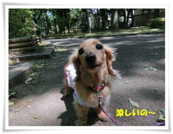 CIMG4-20130508.jpg