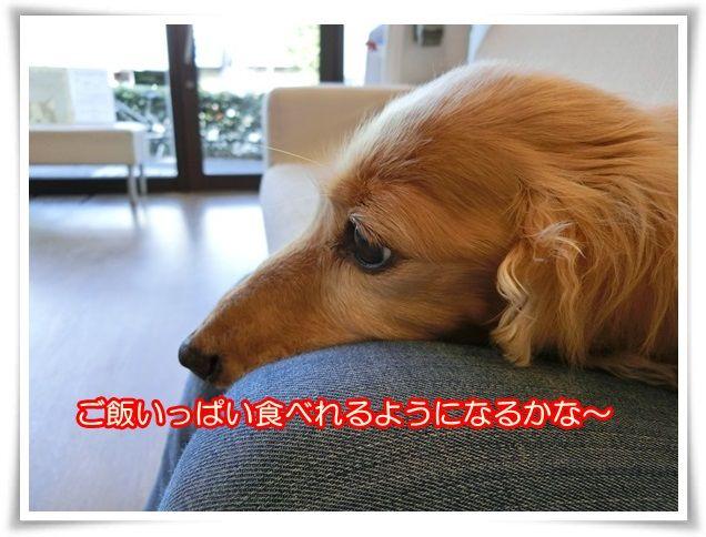 8_20141021093502250.jpg