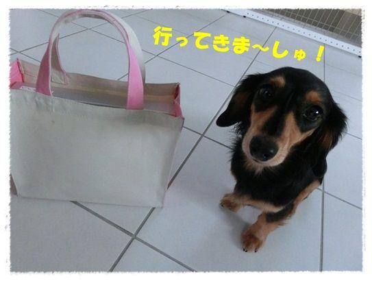 CIMG4-20121119.jpg