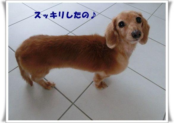 CIMG8318-20121223.jpg