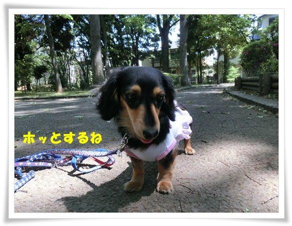 CIMG6-20130509.jpg