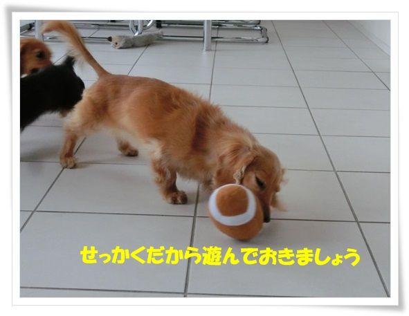 2_20130618115012.jpg