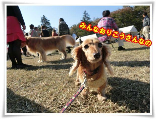 3_20131117112735b79.jpg