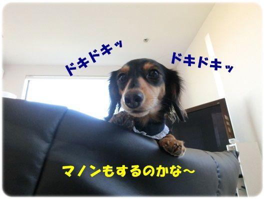 CIMG8071-20121210.jpg