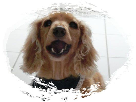 CIMG6474-20121124.jpg