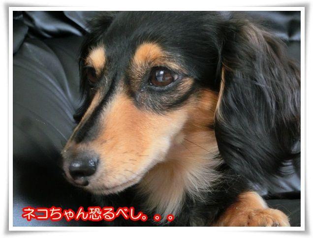15_20140428095100de9.jpg