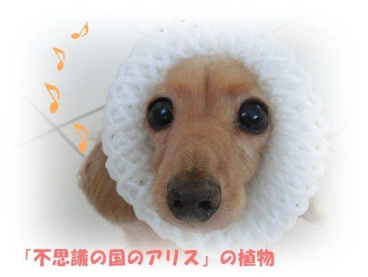 CIMG4203-20121010.jpg