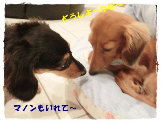 CIMG4926-20121019.jpg