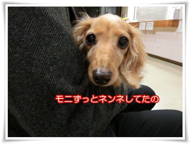 7_201411200757167ca.jpg