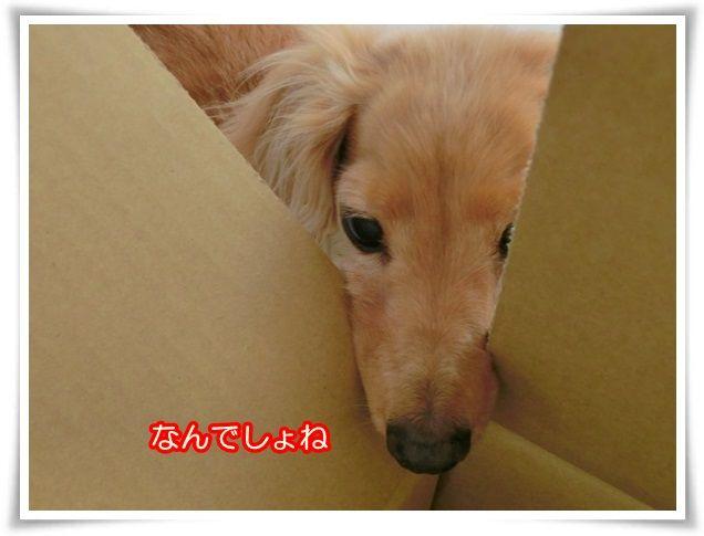 6_20140522073547b3e.jpg