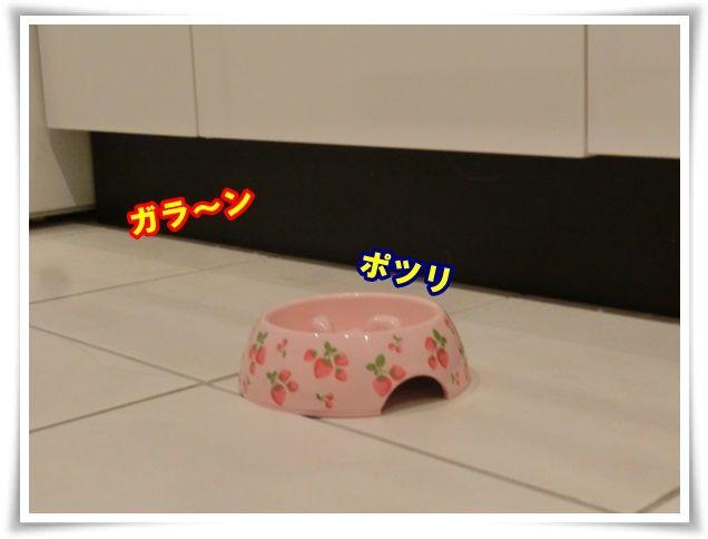 3_20131225110453d2f.jpg