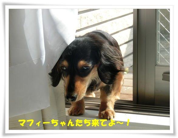 CIMG4695-20130508.jpg