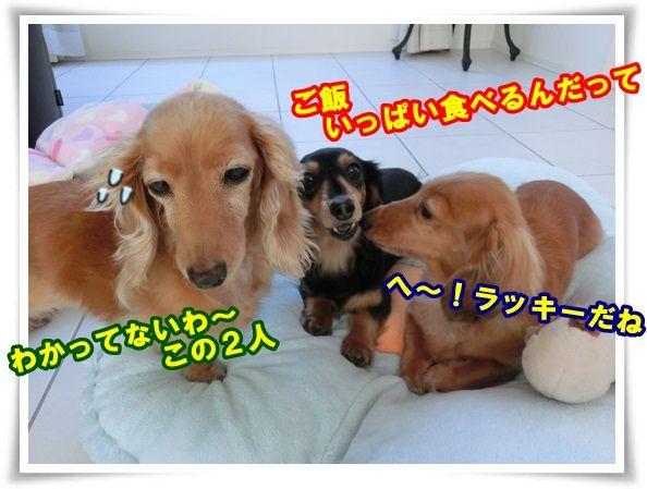 10_20131128094459fa2.jpg