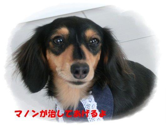 CIMG6900-20121128.jpg
