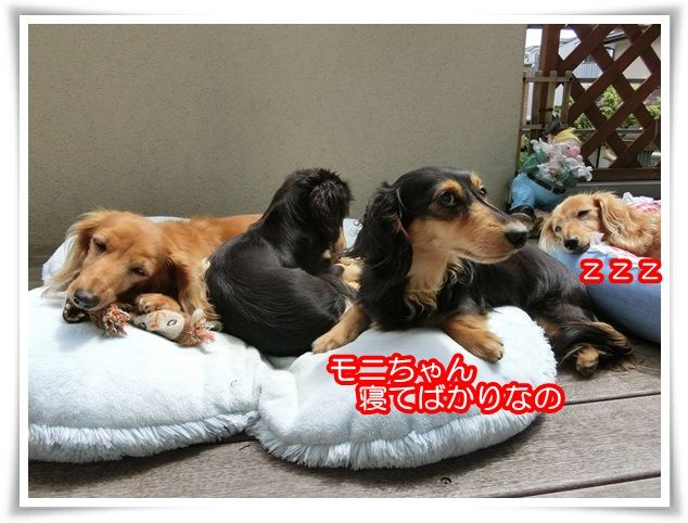 7_201506111932411ff.jpg